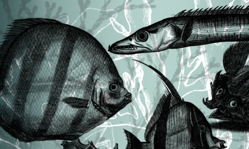 strange little fishies
