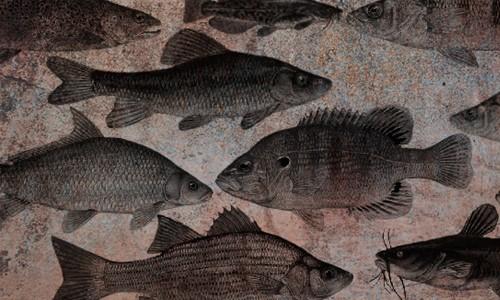 fish brushes no. 1