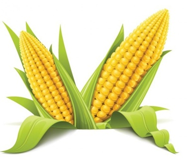 creative,design,download,elements,eps,graphic,illustration,illustrator,new,original,vector,web,yellow,detailed,interface,unique,vectors,summer,quality,stylish,fresh,high quality,ui elements,hires,corn,corn on  cob,ear of corn,harvest,maize,yellow corn vector