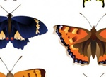 6 Intricate Butterfly Vector Graphics Set