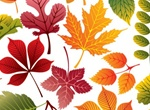 Vivid Autumn Leaves Vectors