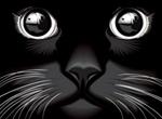 Black Shiny Cat Eyes Vector Illustration