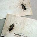 Bug Killer Card
